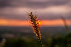 Ηλιοβασίλεμα με το λουλούδι Στοκ φωτογραφία με δικαίωμα ελεύθερης χρήσης