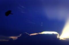Ηλιοβασίλεμα με το πουλί Στοκ εικόνα με δικαίωμα ελεύθερης χρήσης