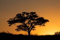 Ηλιοβασίλεμα με το σκιαγραφημένο δέντρο Στοκ φωτογραφία με δικαίωμα ελεύθερης χρήσης