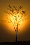 Ηλιοβασίλεμα με το σκιαγραφημένο δέντρο Στοκ Φωτογραφίες