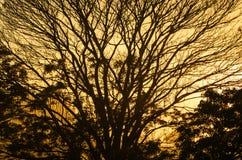 Ηλιοβασίλεμα με το σκιαγραφημένο δέντρο Στοκ Φωτογραφία
