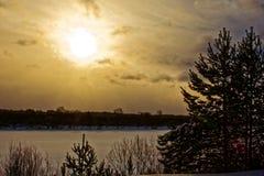 Ηλιοβασίλεμα μπλε ουρανού, αειθαλές δασικό τοπίο Στοκ Εικόνες