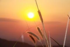 Ηλιοβασίλεμα λουλουδιών καλάμων Στοκ εικόνες με δικαίωμα ελεύθερης χρήσης