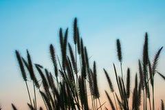 Ηλιοβασίλεμα λουλουδιών, ουρανός ομορφιάς στοκ φωτογραφίες με δικαίωμα ελεύθερης χρήσης