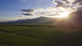 Ηλιοβασίλεμα πέρα από έναν τομέα καλάμων ζάχαρης, Τανζανία Στοκ Εικόνες