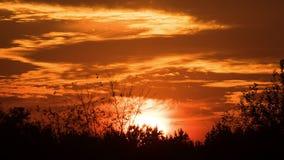 Ηλιοβασίλεμα πέρα από τα δέντρα και τα σύννεφα απόθεμα βίντεο