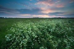 Ηλιοβασίλεμα πέρα από το λιβάδι με τα wildflowers Στοκ Φωτογραφίες