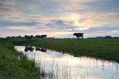Ηλιοβασίλεμα πέρα από το λιβάδι με τις αγελάδες από τον ποταμό Στοκ εικόνα με δικαίωμα ελεύθερης χρήσης