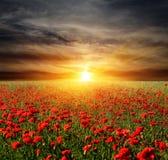 Ηλιοβασίλεμα πέρα από το λιβάδι poppyes Στοκ εικόνα με δικαίωμα ελεύθερης χρήσης