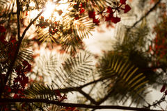 Ηλιοβασίλεμα πέρα από το φύλλο κοσκινίσματος Στοκ εικόνα με δικαίωμα ελεύθερης χρήσης