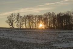 Ηλιοβασίλεμα πίσω από τα δέντρα στοκ εικόνες