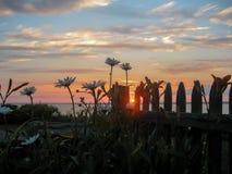 Ηλιοβασίλεμα πίσω από τις μαργαρίτες και το φράκτη Στοκ Φωτογραφία