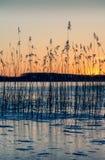 Ηλιοβασίλεμα πίσω από τους καλάμους στον πάγο Στοκ εικόνες με δικαίωμα ελεύθερης χρήσης