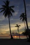 Ηλιοβασίλεμα πίσω από τους φοίνικες Στοκ Φωτογραφίες