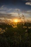 Ηλιοβασίλεμα πίσω από το πορτρέτο χλόης Στοκ Φωτογραφίες