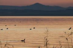 ηλιοβασίλεμα παπιών Στοκ εικόνα με δικαίωμα ελεύθερης χρήσης