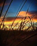 Ηλιοβασίλεμα παραλιών μεταξύ των χλοών Στοκ φωτογραφίες με δικαίωμα ελεύθερης χρήσης