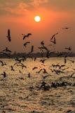 Ηλιοβασίλεμα ποταμών Yangon Στοκ φωτογραφίες με δικαίωμα ελεύθερης χρήσης