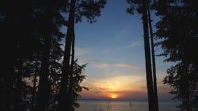 Ηλιοβασίλεμα που πυροβολείται όμορφο από το δάσος απόθεμα βίντεο