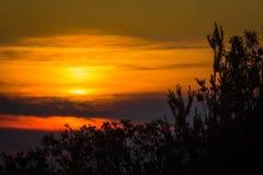 Ηλιοβασίλεμα που πλαισιώνεται από τα δέντρα πεύκων στοκ εικόνες