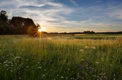 Ηλιοβασίλεμα σε έναν τομέα στη Φινλανδία Στοκ εικόνες με δικαίωμα ελεύθερης χρήσης