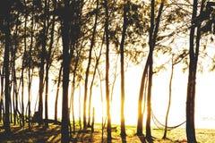 Ηλιοβασίλεμα σε ένα δάσος πεύκων κοντά στη θάλασσα Ταϊλάνδη Στοκ Εικόνες