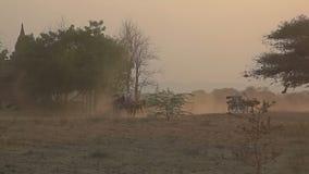 Ηλιοβασίλεμα σε Bagan με ένα κάρρο αλόγων φιλμ μικρού μήκους