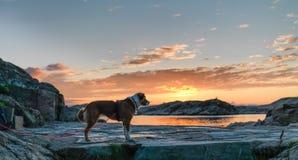 ηλιοβασίλεμα σκυλιών στοκ φωτογραφίες με δικαίωμα ελεύθερης χρήσης