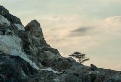 Ηλιοβασίλεμα στα βουνά ερήμων - δέντρο στο βράχο Στοκ φωτογραφία με δικαίωμα ελεύθερης χρήσης