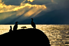 Ηλιοβασίλεμα στην ακτή Στοκ Φωτογραφίες