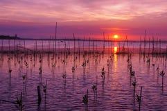 Ηλιοβασίλεμα στη λιμνοθάλασσα Tam Giang - χρώμα Στοκ Φωτογραφία
