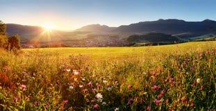 Ηλιοβασίλεμα στον τομέα λουλουδιών - Σλοβακία Tatra στοκ εικόνα