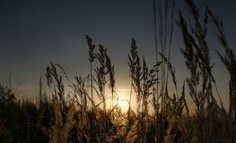 Ηλιοβασίλεμα στον τομέα Στοκ Φωτογραφία