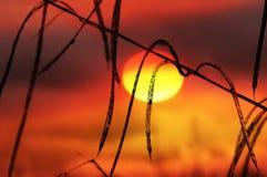 Ηλιοβασίλεμα στους λοβούς φασολιών Στοκ Εικόνες