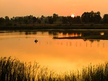 Ηλιοβασίλεμα στο δάσος κοντά στο μικρό ποταμό στην Ταϊλάνδη Στοκ φωτογραφία με δικαίωμα ελεύθερης χρήσης