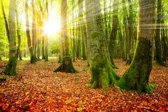 Ηλιοβασίλεμα στο δάσος φθινοπώρου στοκ φωτογραφία με δικαίωμα ελεύθερης χρήσης