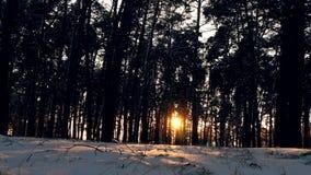 Ηλιοβασίλεμα στο δάσος χειμερινών παγωμένο Χριστουγέννων Στοκ εικόνα με δικαίωμα ελεύθερης χρήσης