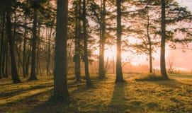 Ηλιοβασίλεμα στο δάσος Στοκ Εικόνα