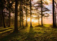Ηλιοβασίλεμα στο δάσος Στοκ φωτογραφίες με δικαίωμα ελεύθερης χρήσης