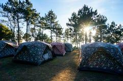 Ηλιοβασίλεμα στο δάσος Στοκ Φωτογραφίες