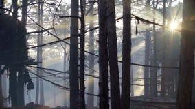 Ηλιοβασίλεμα στο δάσος απόθεμα βίντεο
