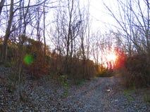 Ηλιοβασίλεμα στο δάσος Στοκ Εικόνες