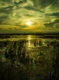 Ηλιοβασίλεμα στο έλος στοκ εικόνα με δικαίωμα ελεύθερης χρήσης