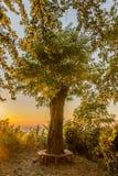 Ηλιοβασίλεμα στο αναπαραγμένο δέντρο στοκ εικόνες με δικαίωμα ελεύθερης χρήσης