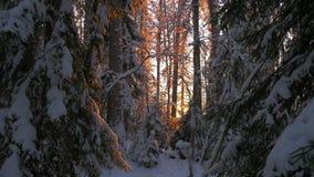 Ηλιοβασίλεμα στο βαθύ χειμερινό δάσος φιλμ μικρού μήκους