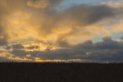 Ηλιοβασίλεμα στο λιβάδι καλάμων Στοκ Φωτογραφίες