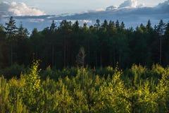 Ηλιοβασίλεμα στο καρελιανό δάσος στη Ρωσία Στοκ Φωτογραφίες