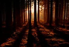 Ηλιοβασίλεμα στο ξύλο οξιών Στοκ Φωτογραφίες