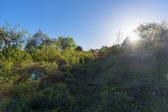 Ηλιοβασίλεμα στο πράσινο δάσος Στοκ εικόνα με δικαίωμα ελεύθερης χρήσης