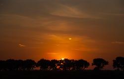 Ηλιοβασίλεμα στο δρόμο Σκιαγραφίες των δέντρων κατά μήκος του δρόμου Ο ήλιος μέσω των δέντρων Στοκ Φωτογραφίες